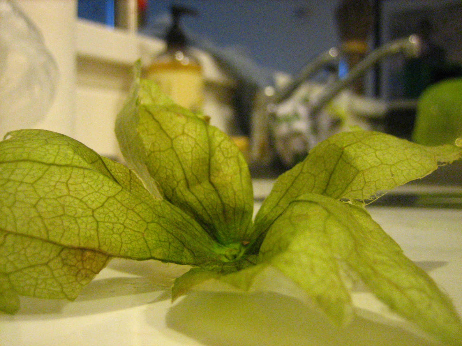 The husk from a tomatillo, inverted.  Who knew those sticky husks could make such lovely floral arrangements?
