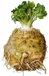 not-celery-celery-root01