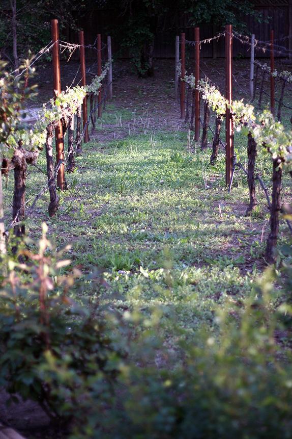 in the vines | via vmac+cheese