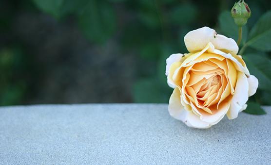a rose | via vmac+cheese