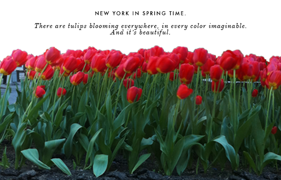 tulips in nyc