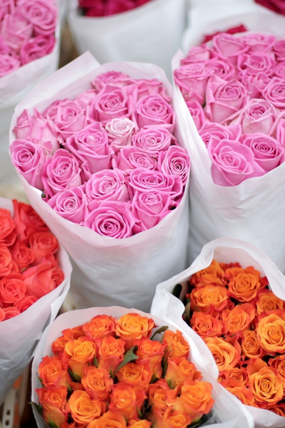 roses by sophie Learmont