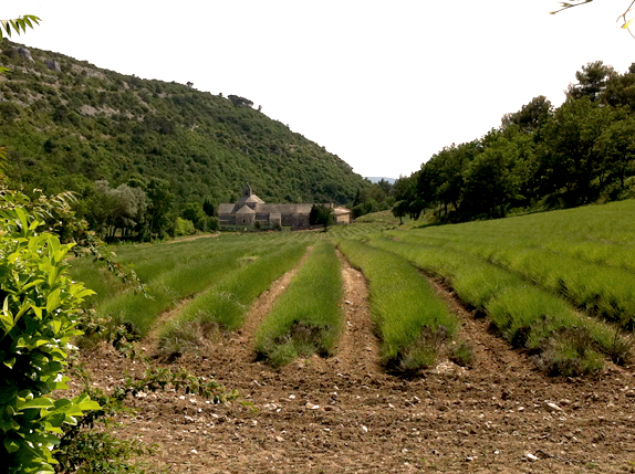 abbaye in provence