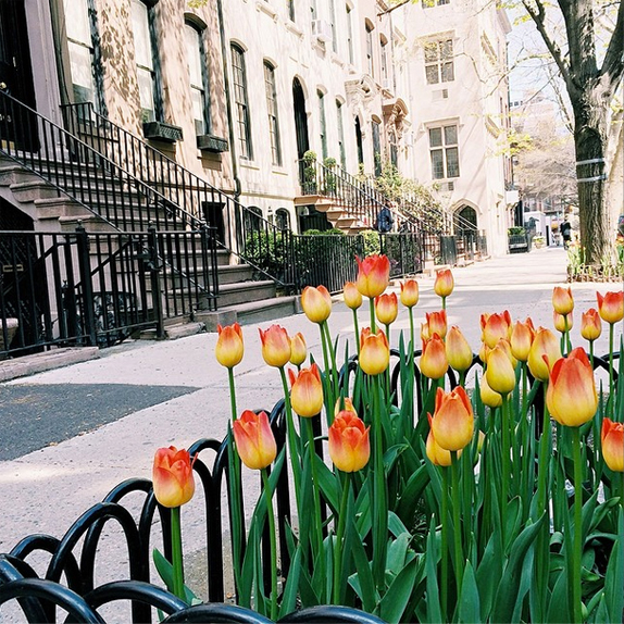 tulips on the block by Victoria McGinley