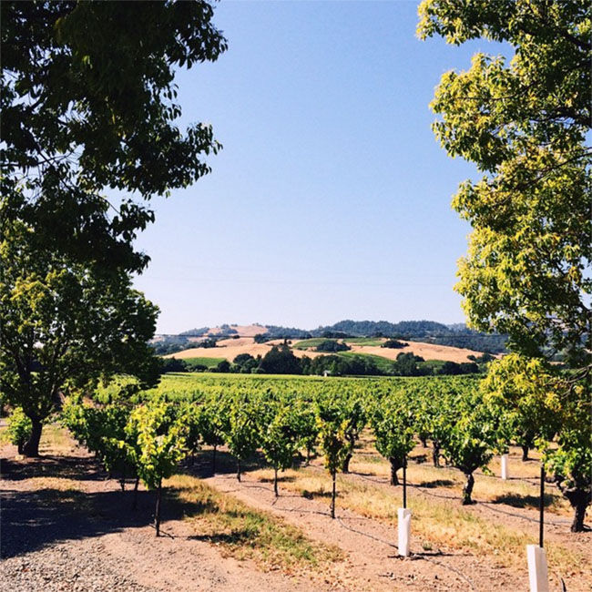 napa valley travel tips